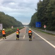 Schwan verirrt sich auf die Autobahn