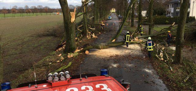 """Weiteres Update zum Sturm """"Friederike"""""""