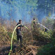 Waldbrand im Grüner Tal fordert die Feuerwehr