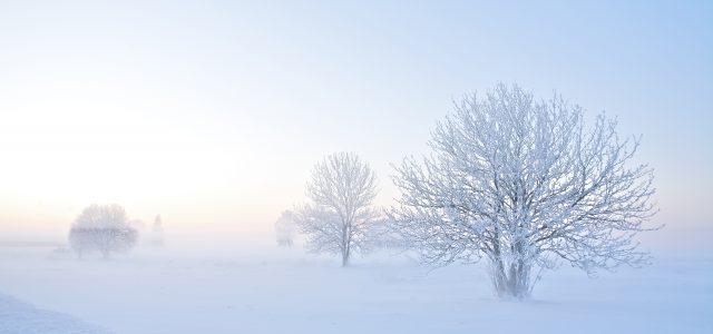 Vom Staubkorn zum Eiskristall: So entsteht Schnee  – Wie er sich bildet, welche Arten es gibt und warum Schnee eigentlich weiß ist