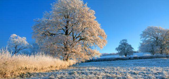 Eisiges Winterwetter kommt – Es wird deutlich kälter mit Dauerfrost
