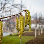 Das Pollenjahr 2019 startet: Nicht nur Viren belasten jetzt die Atemwege
